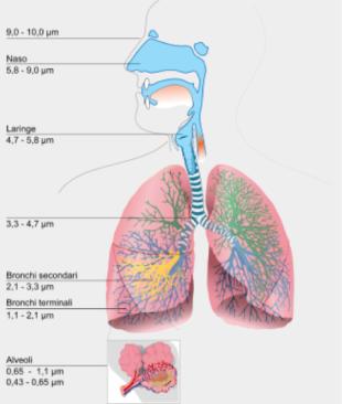 Penetrazione delle polveri nell'apparato respiratorio. È evidente come le nanopolveri siano in grado di penetrare a fondo nell'organismo e, si sospetta, entrare addirittura nel circolo sanguigno, penetrando poi nelle cellule