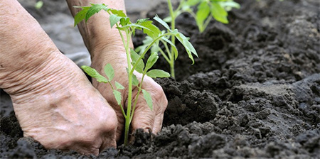 Save Organics in Soil